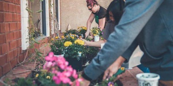 people planting flowers